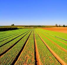 Agriculture is the backbone of Pakistan