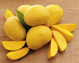 Absence of treatment plants hits Punjab mango exports