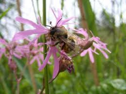 Bee Faithful Plant-pollinator Relationships Compromised Bees Decline