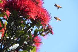 Bees 'Betray' their Flowers When Pollinator Species Decline