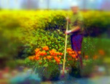 Gardening Can Help Beat Depression