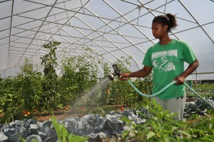 How Gardening Will Phase Out The Welfare State
