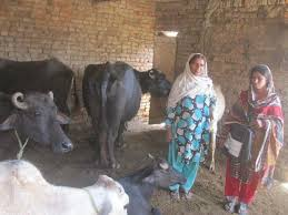 Punjab Livestock to launch training for womenfolk
