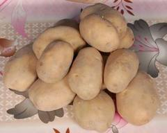 Sensitive Detection of PLRV in Potato Crop of Pakistan