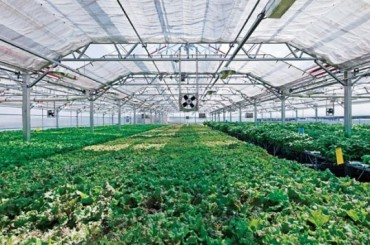 Whole Foods Announces Plans for 20,000 Sq. Ft. Rooftop Farm Atop New Gowanus Store