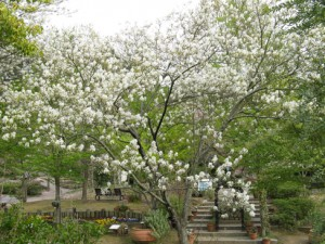 10 Under-Used Trees and Shrubs For the Fruitful Edible Yard
