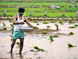 Declining fertiliser usage hurting agriculture output