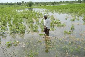 Peasants demand compensation for crops damaged in floods