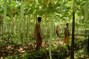 Pesticide-free: Drive to promote organic farming launched