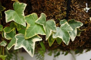 Purify Your Indoor Air With These 10 Easy-Care Houseplants