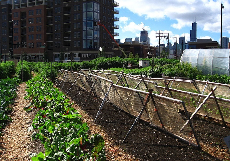 Agribusiness is greener than urban farming