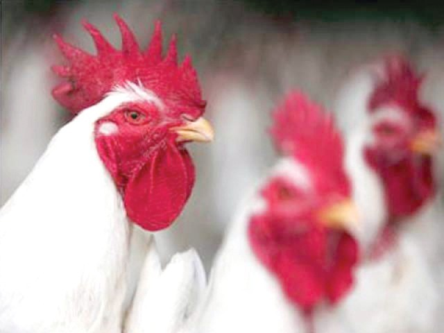 Poultry industry: Business booms with growing demand, new tech
