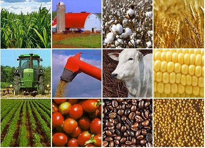 Agribusiness: Commodity Trading and Risk Management