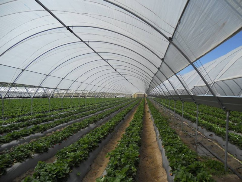 Tunnel farming losing momentum