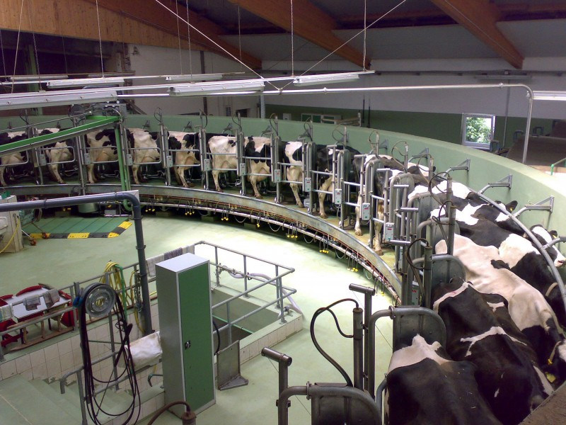Agribusiness Is Forcing Factory Dairy Farms Down Our Throats