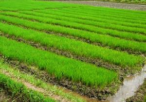 Pakistan Agribusiness Report Q4 2009 (Business Monitor International)