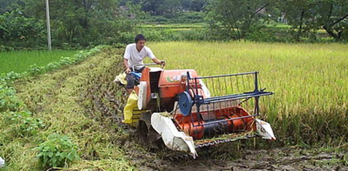 Slf-propelled multi-row weeder for dryland crops