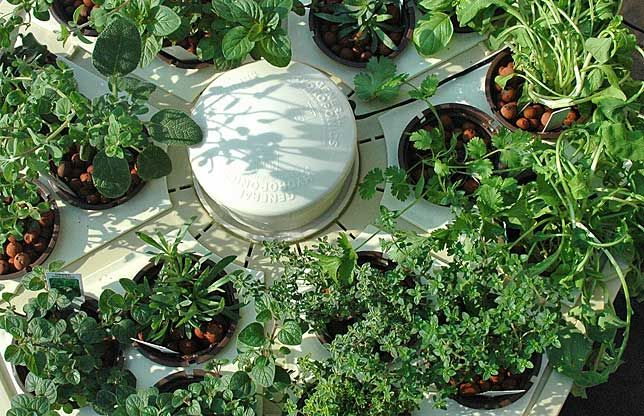 Types of Hydroponic Systems