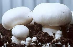 Buy Fresh Button Mushroom in Islamabad
