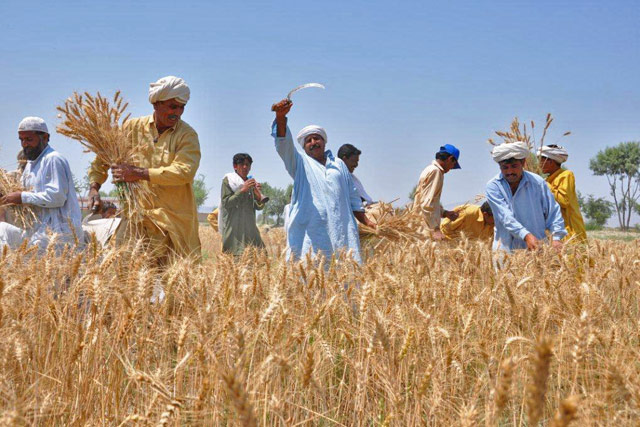 Punjab's policy draft on farming of Pakistan