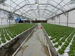Greenhouse manufacturers in Pakistan